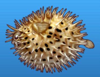 File:Porcupine fish.png