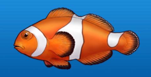 File:Anemone fish.png