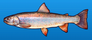 Dolly varden trout
