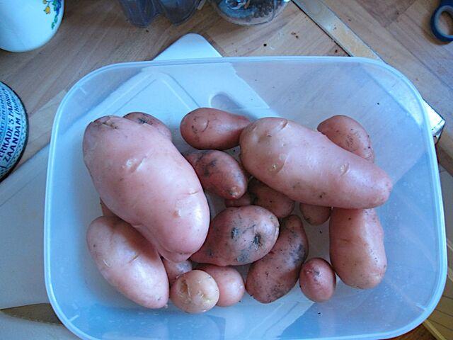 File:Desiree potato.jpg