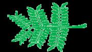 Leaf morphology Bipinnate