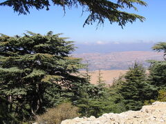 View from the Barouk Forest 1