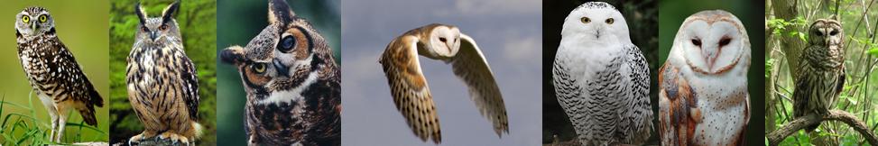 Owl heading