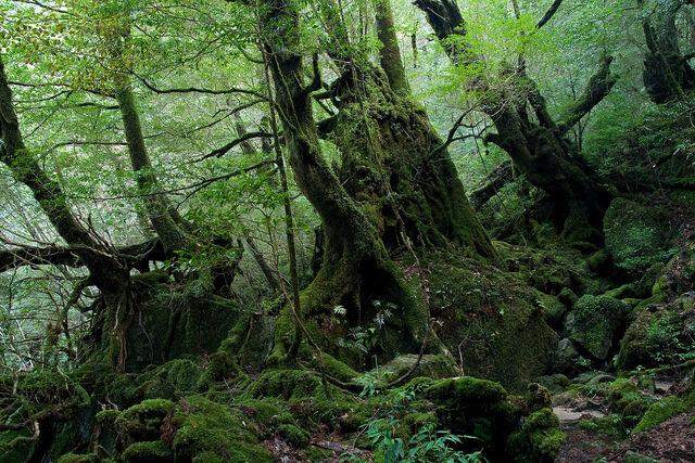 File:1280px-Shiratani Unsui Gorge 17.jpg