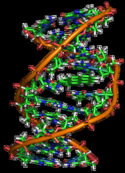 Benzopyrene DNA adduct 1JDG