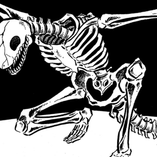 A Reptiloid's skeleton