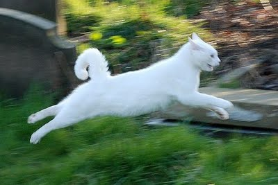 File:WindClan Cat.jpg