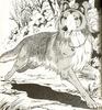 Lassie10