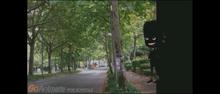 Psychris hidden in the Shadows near the tree-0