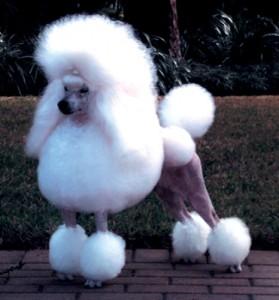 File:Henrietta animal.jpg