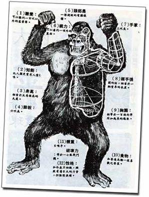 File:Kong puppet anatomyimage.jpeg