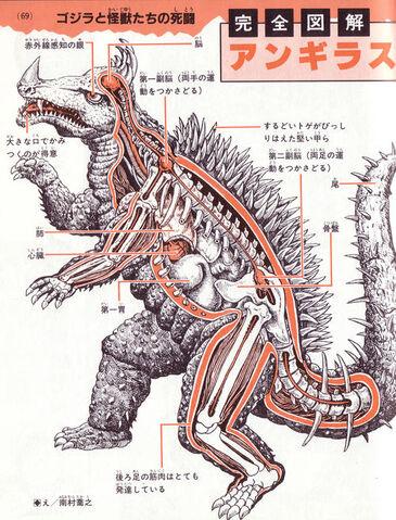File:Anguirus anatomy.jpg