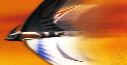 File:Leo (Light Speed).jpg