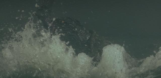 File:Gamera - 3 - vs Gyaos - 25 - Gamera bites the foot of Gyaos after landing in the water.png