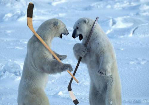 File:Polar bears.jpg