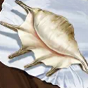 Cersei Lannister's Seashell