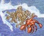 Cecile Reef Artwork