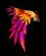 Fenny Bird