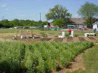 May 24 garden