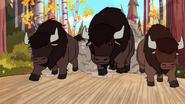 S1e9 buffalo
