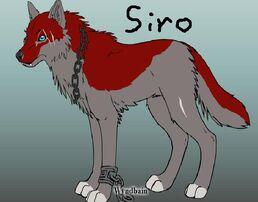 Siro the Wolf