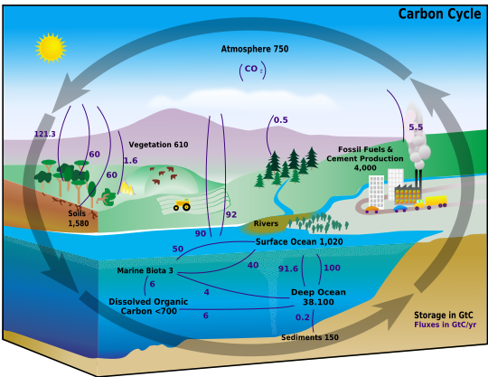 File:Carbon cycle.png