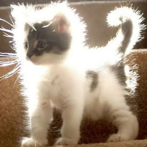 File:Static-electricity-cat.jpg