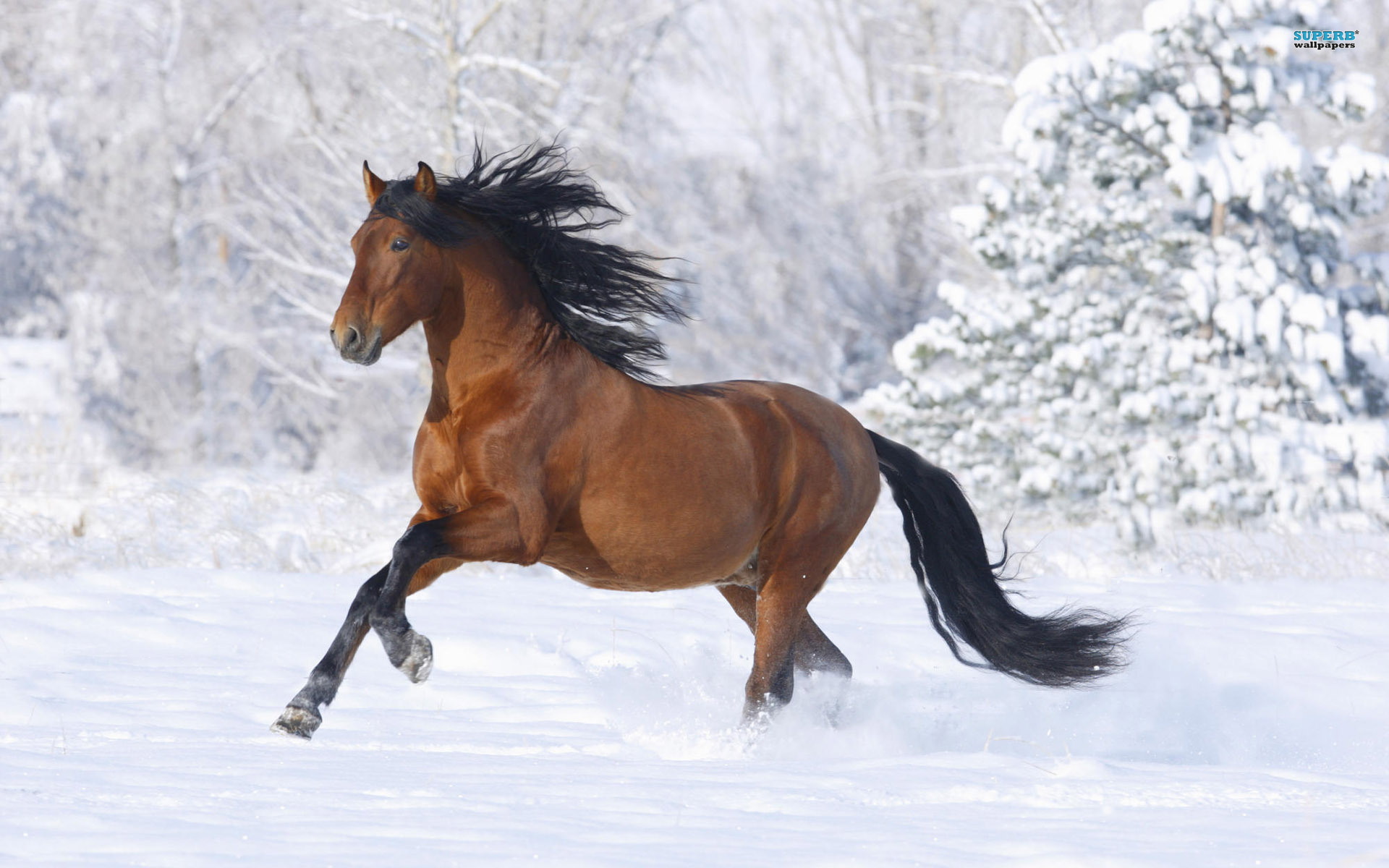 image - horse-wallpaper-brown-horse 1920x1200 95863 | grey