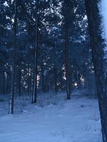 Greybarkforest1