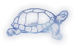 Tortoise Constellation Icon