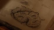 215-Jinnamuru Xunte brain diary