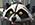 File:WildRac-Emote-GTAWiki.png
