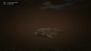 Peyote Plants Animals GTAVe Dolphin