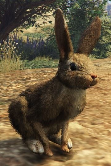 File:Rabbit-GTAV.jpg