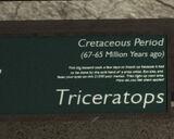 Libertonian-TLAD-FossilTriceratopsPlaque