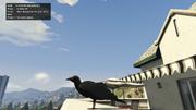 Peyote Plants Animals GTAVe Crow