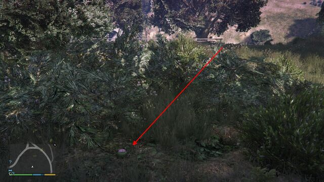 File:Peyote Plants GTAVe 16 Galileo Tunnel View.jpg