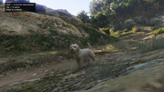Peyote Plants Animals GTAVe West-Highland-Terrier