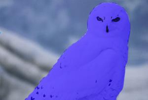 File:Snowyowllarge edited-1.png