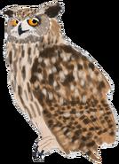 Eagleowldrawingstock