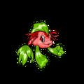 Koi strawberry happy