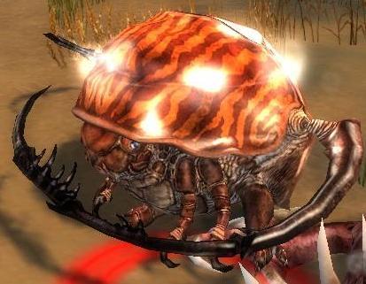 File:Rock Beetle.jpg