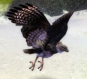 File:Mountain Eagle.jpg