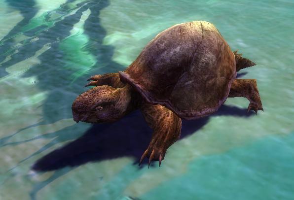 File:Turtle Hatchling.jpg