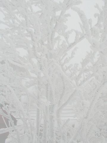 File:Rime ice-bright.jpg