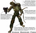 Warrior Form Human2.png