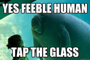 File:Manatee.png