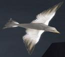 High Charity bird