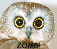 File:Zomg owl.jpg