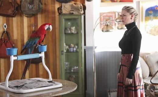 File:HAPPY-ENDINGS-Meat-the-Parrots-Season-2-Episode-11.jpeg